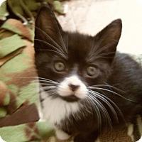 Adopt A Pet :: ABILENE - Medford, WI