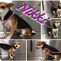 Adopt A Pet :: NIKKI - Macon, GA
