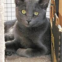 Adopt A Pet :: JACK - Woodland Hills, CA
