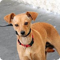 Adopt A Pet :: Paul - Palmdale, CA