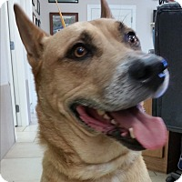 Adopt A Pet :: Kayne (Guest) - Roswell, GA