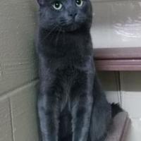 Adopt A Pet :: Clyde - Moncton, NB