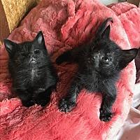 Adopt A Pet :: Moko and Koko - Los Angeles, CA