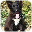 Photo 4 - Husky/Border Collie Mix Puppy for adoption in Los Angeles, California - Nina von Kern