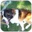 Photo 3 - St. Bernard Dog for adoption in Flint, Michigan - Anna