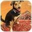 Photo 1 - Husky/Shepherd (Unknown Type) Mix Dog for adoption in Nanuet, New York - Sally
