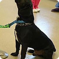 Adopt A Pet :: Marty - Hastings, NY