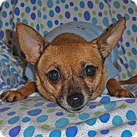 Adopt A Pet :: RAZZLE: Adopted! - Palm Coast, FL