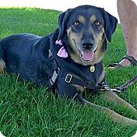 Adopt A Pet :: Samantha family dog - Sacramento, CA