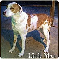 Adopt A Pet :: Little Man - Silsbee, TX