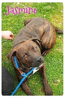 Boxer Dog for adoption in Crandall, Georgia - Jasmine
