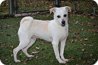 Parson Russell Terrier Mix Dog for adoption in Brooksville, Florida - Kenny