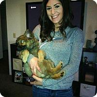 Adopt A Pet :: Seren - Sacramento, CA