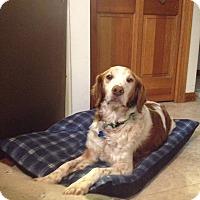 Adopt A Pet :: Harry - Buffalo, NY