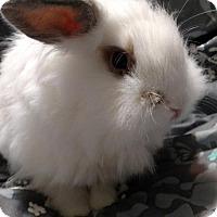 Adopt A Pet :: Pinky - Conshohocken, PA