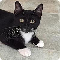Adopt A Pet :: Burr - Spencer, NY