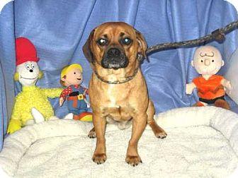 Pug/Beagle Mix Dog for adoption in Kankakee, Illinois - Moe