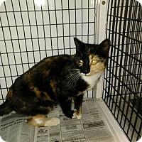 Adopt A Pet :: Buttercup - Jefferson, NC