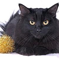 Adopt A Pet :: Prim - Chicago, IL