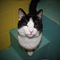 Adopt A Pet :: Citizen - Pottsville, PA