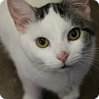 Adopt A Pet :: Scotty - Dunkirk, NY