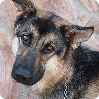 Adopt A Pet :: Sargent von Schuby - Los Angeles, CA