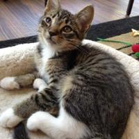 Adopt A Pet :: Jasper - Greensboro, GA