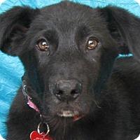 Adopt A Pet :: Tayla Scott - Cuba, NY
