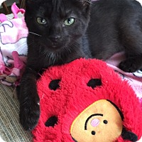 Adopt A Pet :: Cola - Chattanooga, TN