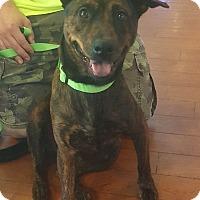 Adopt A Pet :: Heather - Marlton, NJ