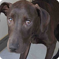 Adopt A Pet :: Spencer - Newnan City, GA