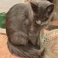 Adopt A Pet :: Ren - Colorado Springs, CO