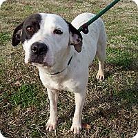 Adopt A Pet :: Ladye - courtesy post - Glastonbury, CT