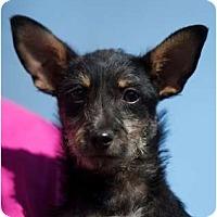 Adopt A Pet :: Ella - Providence, RI