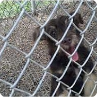 Adopt A Pet :: Vivian - Niceville, FL