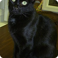 Adopt A Pet :: Kevin - Hamburg, NY