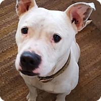 Adopt A Pet :: Wilbur Charles - nashville, TN