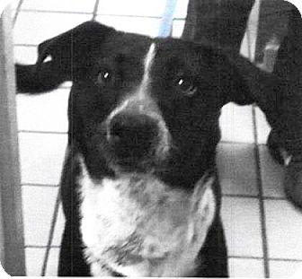 Border Collie Mix Dog for adoption in Spokane, Washington - Jasmine
