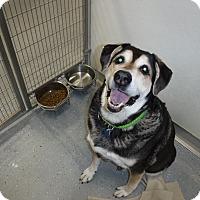Adopt A Pet :: BOOMER - Sandusky, OH
