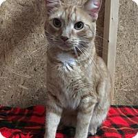 Adopt A Pet :: Goldie - Centerville, GA