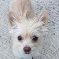 Adopt A Pet :: Murphy - Seagoville, TX