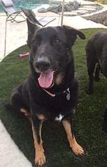 German Shepherd Dog Dog for adoption in Sacramento, California - Buster
