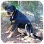 Photo 3 - Australian Shepherd Mix Dog for adoption in Tracy, California - Jackie