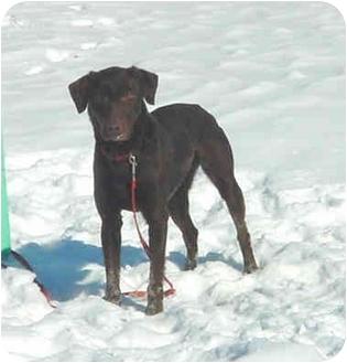 Labrador Retriever Mix Dog for adoption in Austin, Minnesota - Destiny