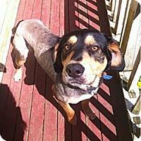 Adopt A Pet :: Gator - Shelton, WA