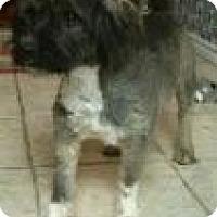Adopt A Pet :: Chase - justin, TX