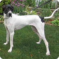 Adopt A Pet :: Darla - Pearl River, NY