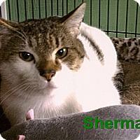 Adopt A Pet :: Sherman - Medway, MA