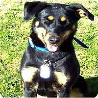 Adopt A Pet :: Anabelle - Scottsdale, AZ