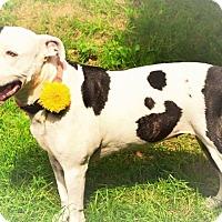 Adopt A Pet :: Lucy - Emmett, MI